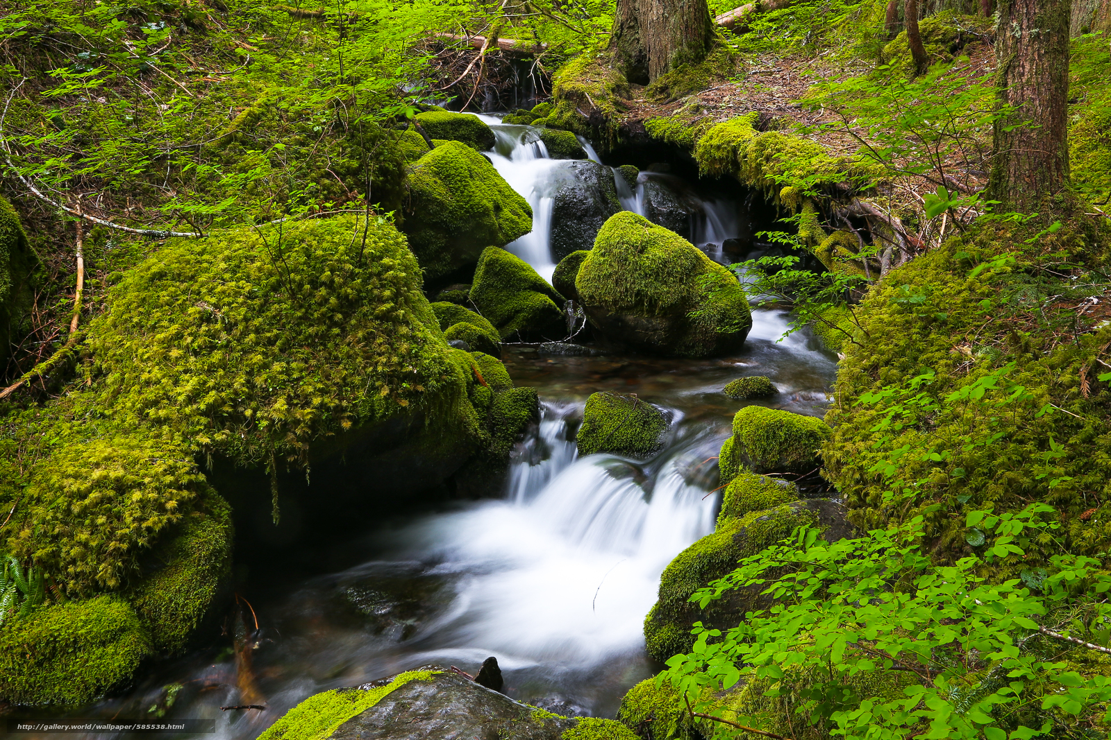 Download wallpaper small river,  moss,  stones,  trees free desktop wallpaper in the resolution 4541x3027 — picture №585538