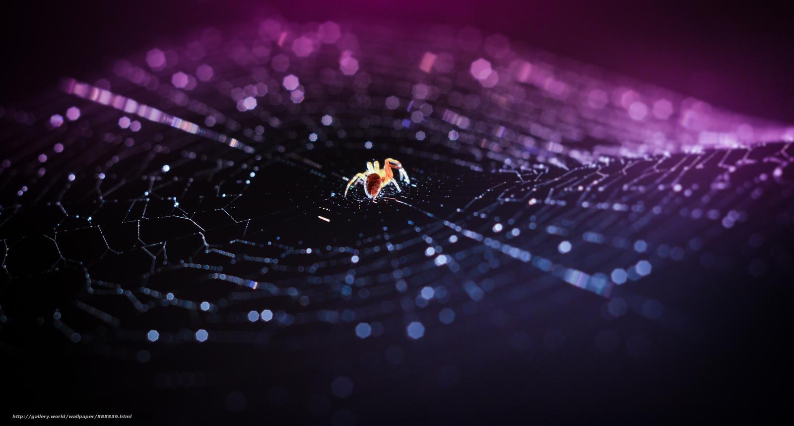 Скачать обои паутина,  паук,  макро,  боке бесплатно для рабочего стола в разрешении 2048x1099 — картинка №585539