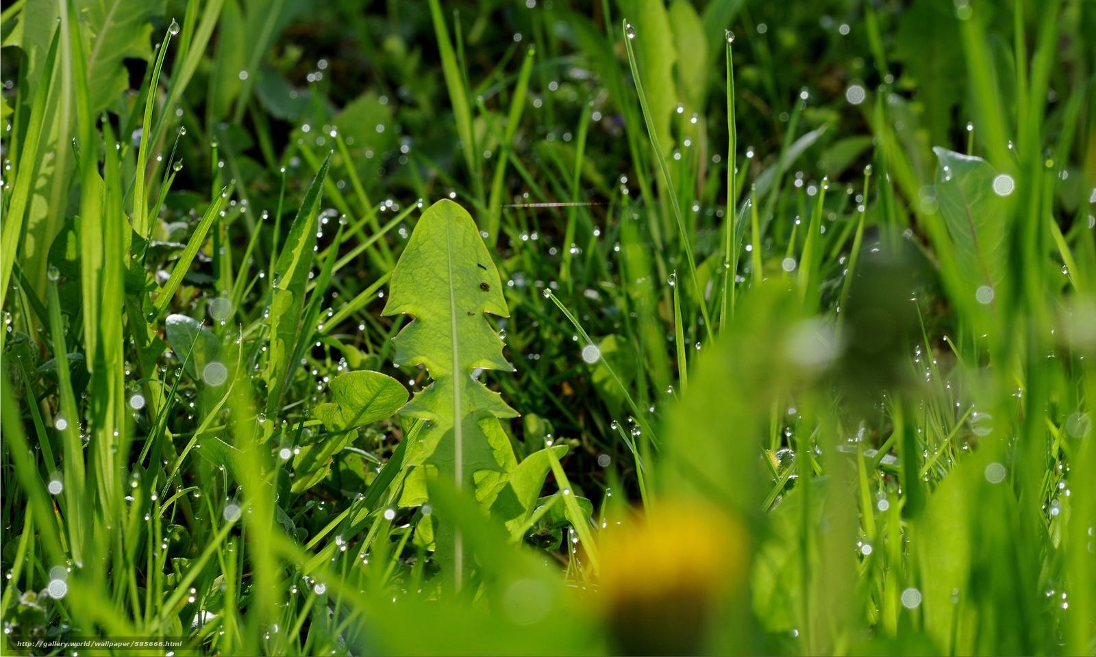 Descargar gratis hierba,  rocío,  Macro Fondos de escritorio en la resolucin 2500x1500 — imagen №585666