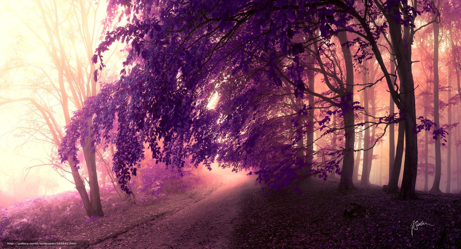 下载壁纸 冠,  树,  叶子,  道路 免费为您的桌面分辨率的壁纸 2000x1082 — 图片 №585961
