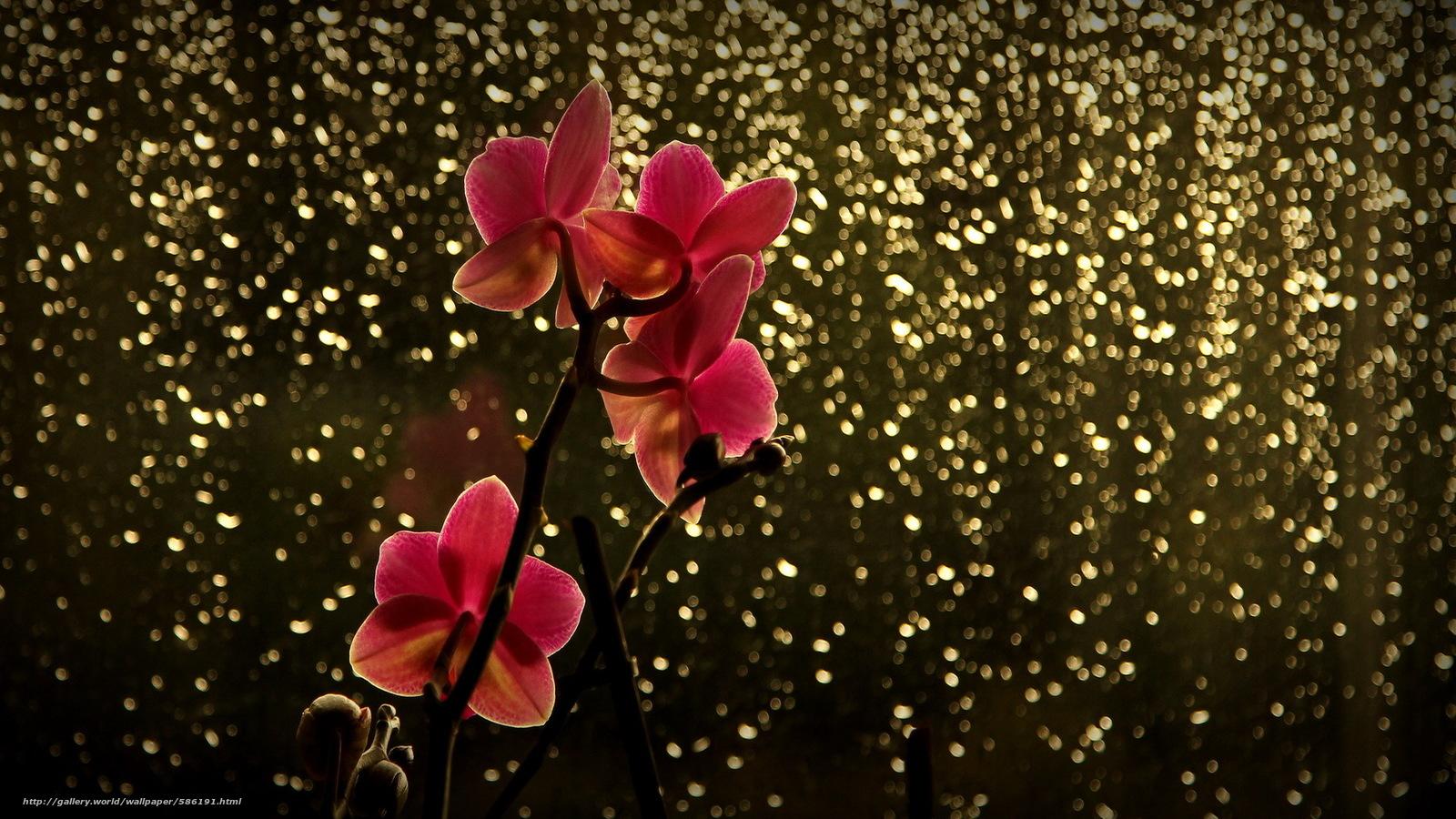 Скачать обои блики,  красная,  орхидея,  ветка бесплатно для рабочего стола в разрешении 1920x1080 — картинка №586191
