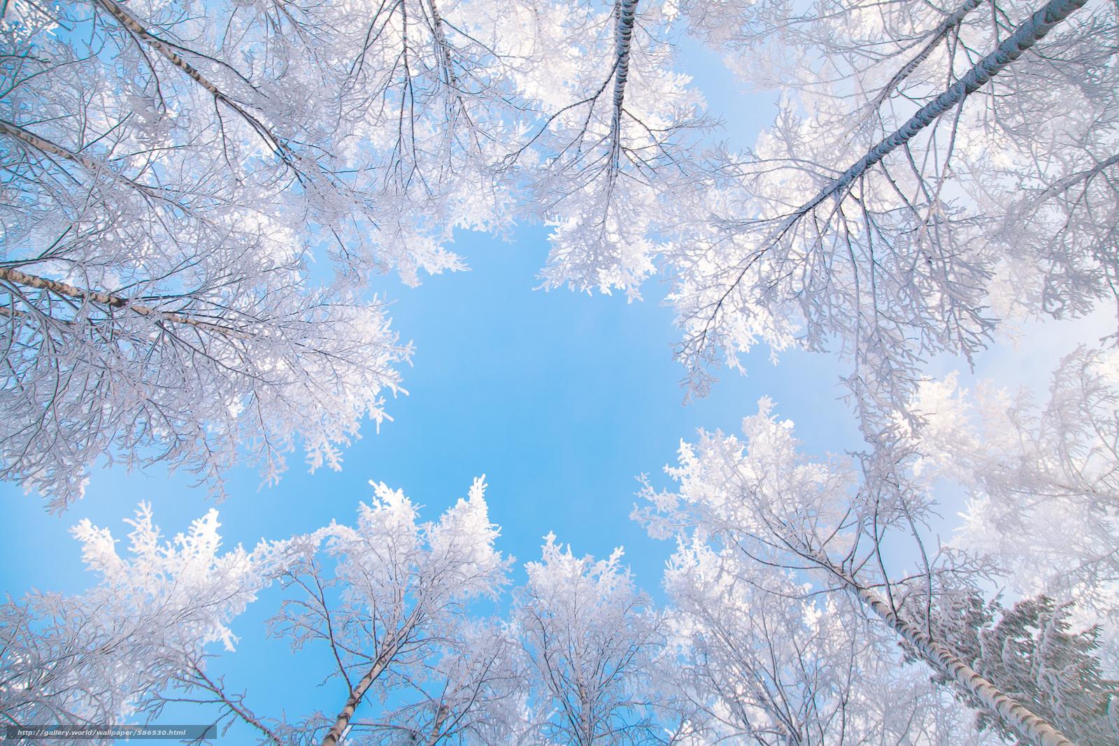 Descargar gratis cielo,  árboles,  superior Fondos de escritorio en la resolucin 2400x1600 — imagen №586530