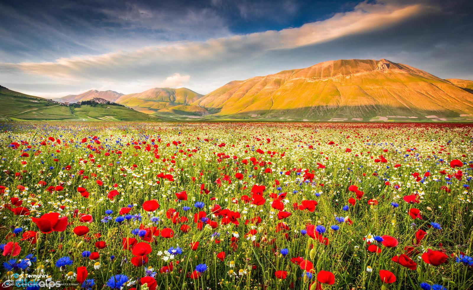 Scaricare Gli Sfondi Montagna Natura Campo Fiori Sfondi Gratis