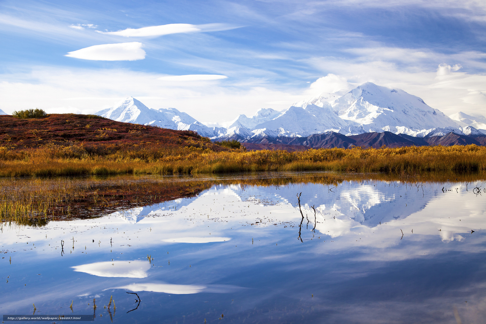 Download Background - Caribou and Mount McKinley, Denali National ...