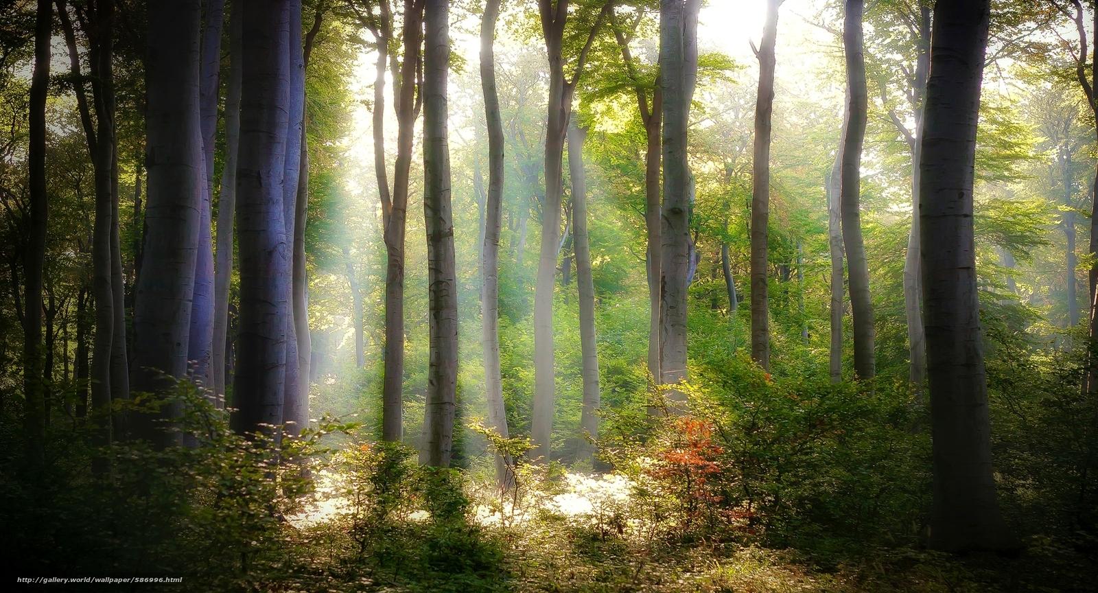 Скачать обои деревья,  лес,  свет,  зеленые бесплатно для рабочего стола в разрешении 2000x1080 — картинка №586996
