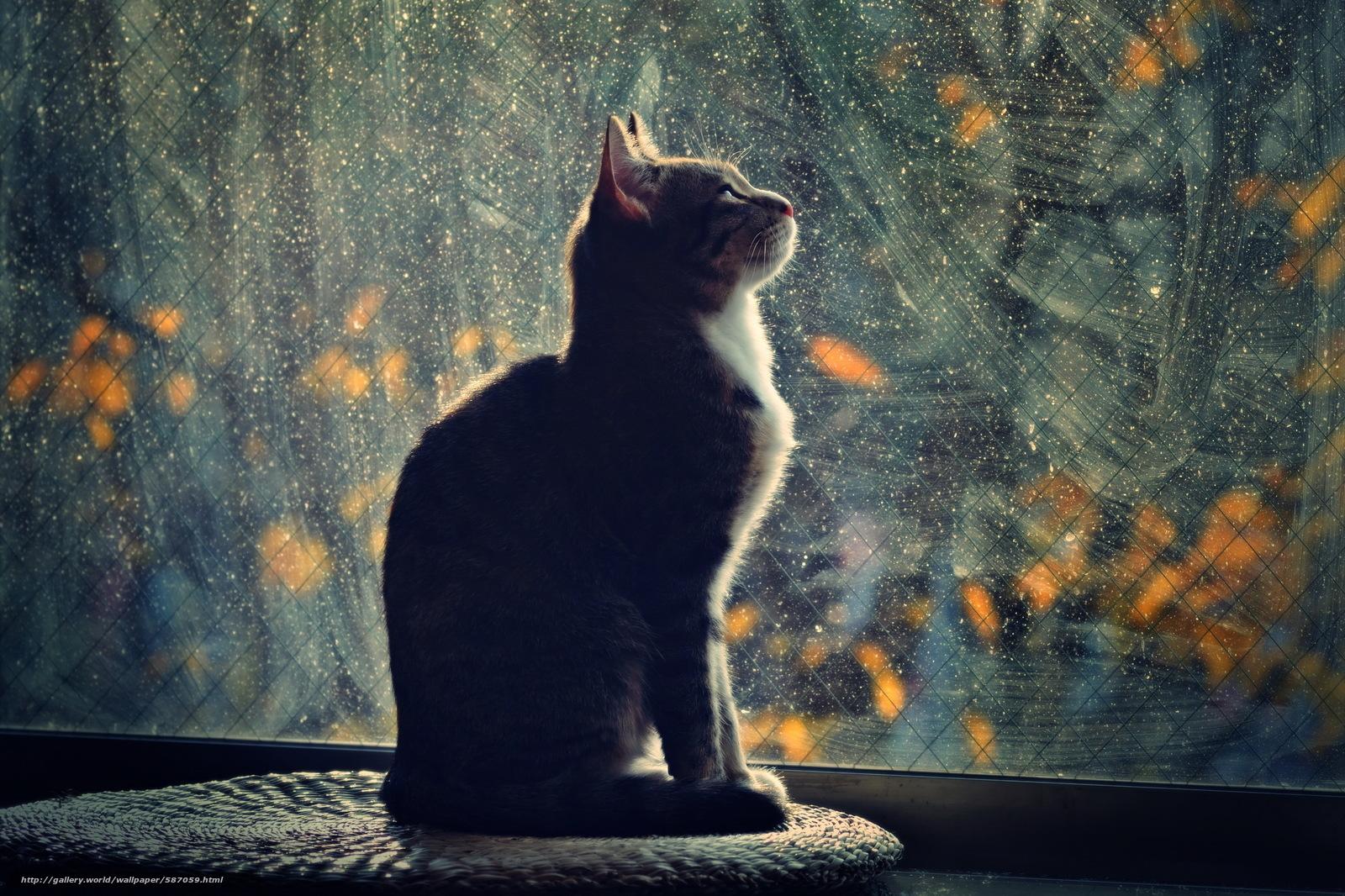 Скачать обои кошка,  профиль,  вечер,  свет бесплатно для рабочего стола в разрешении 2561x1706 — картинка №587059