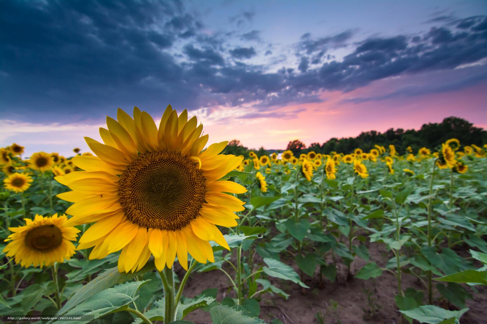 Scaricare gli sfondi nuvole campo estate tramonto for Desktop gratis estate