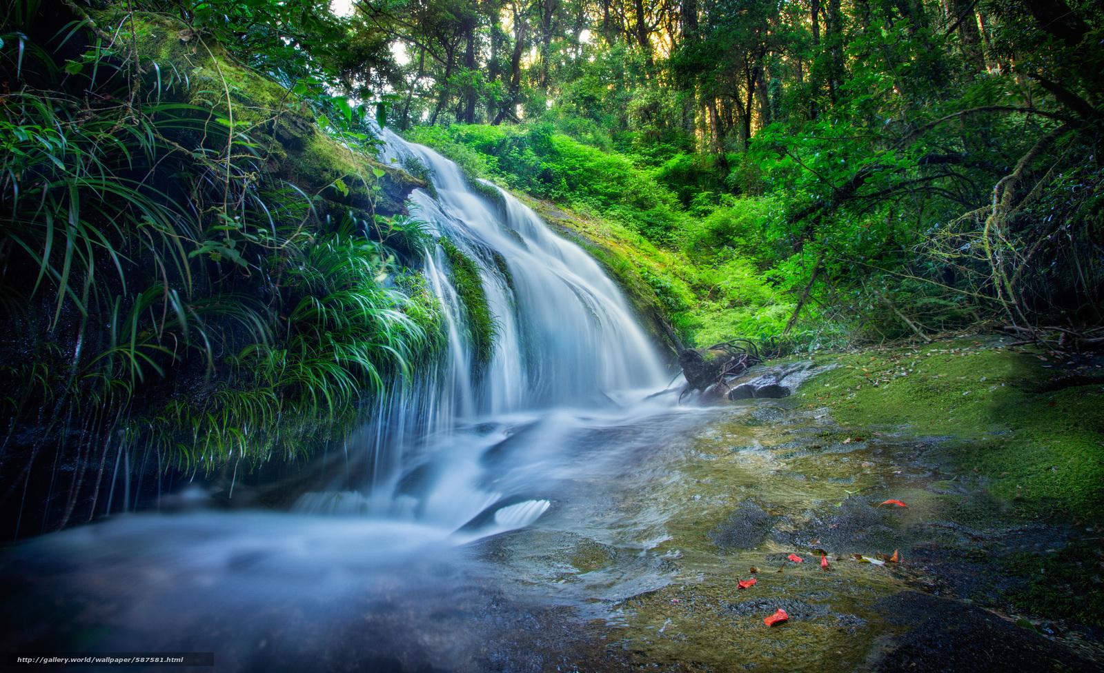 scaricare gli sfondi pietre,  foresta,  cascata,  FLOW Sfondi gratis per la risoluzione del desktop 4000x2440 — immagine №587581