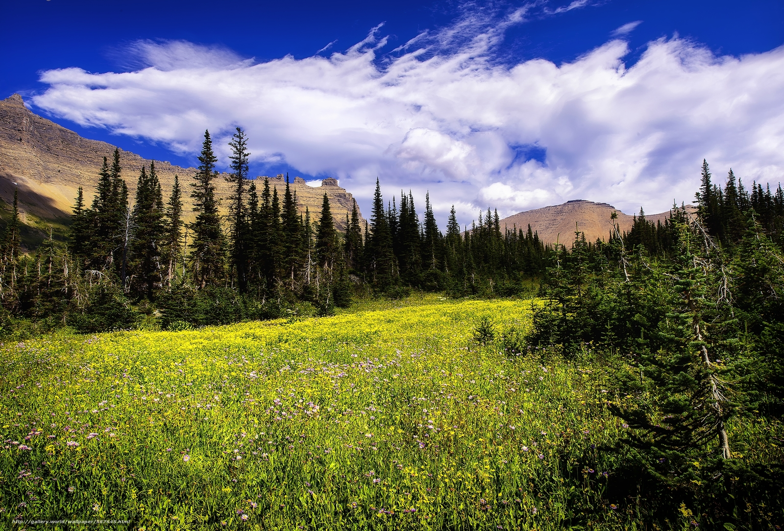 download wallpaper glacier national park montana