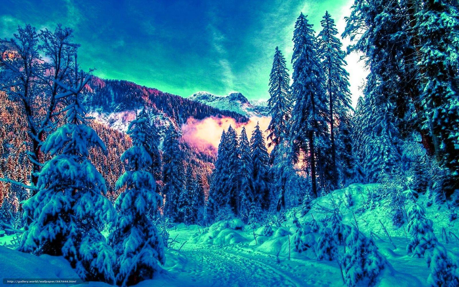 scaricare gli sfondi inverno,  foresta,  nevicata,  abete rosso Sfondi gratis per la risoluzione del desktop 1920x1200 — immagine №587999