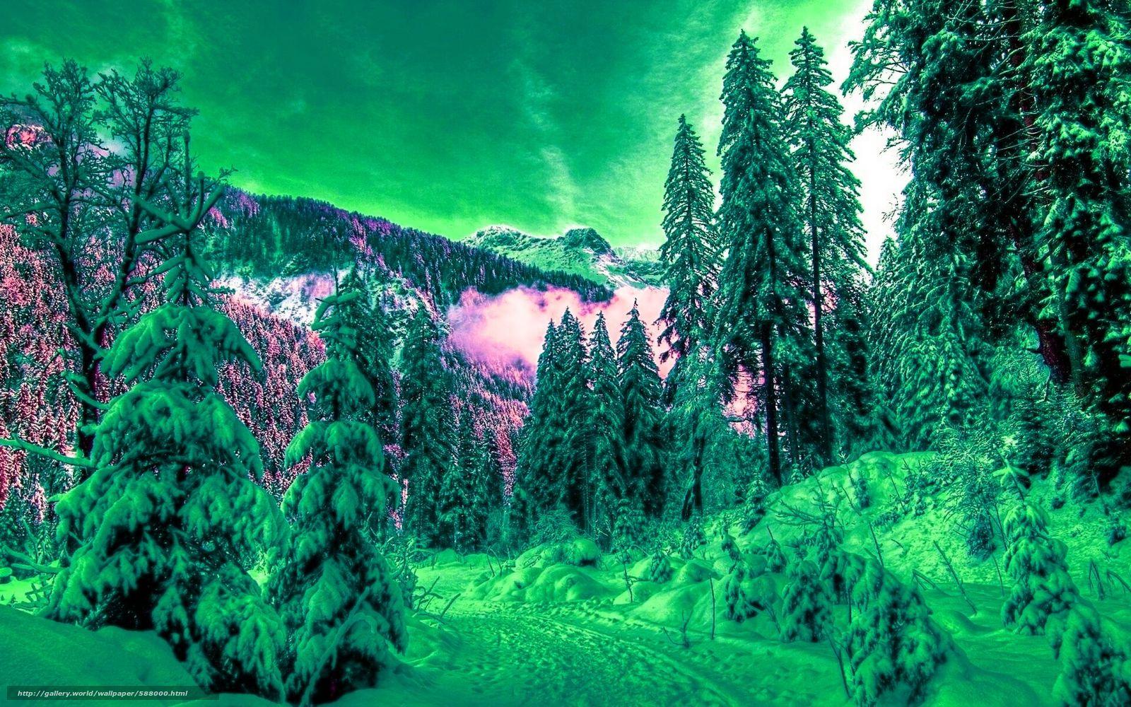 Скачать обои зима,  лес,  снег,  ели бесплатно для рабочего стола в разрешении 1920x1200 — картинка №588000
