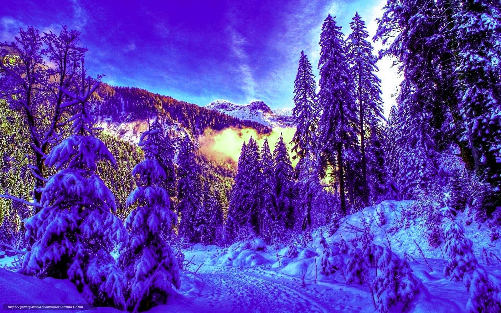 Скачать обои зима,  лес,  снег,  ели бесплатно для рабочего стола в разрешении 1920x1200 — картинка №588001