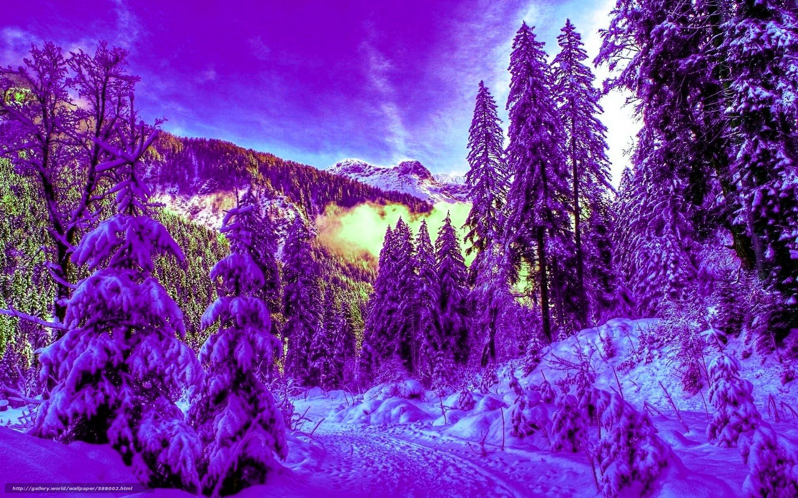 壁紙をダウンロード 冬,  森,  雪,  トウヒ デスクトップの解像度のための無料壁紙 1920x1200 — 絵 №588002