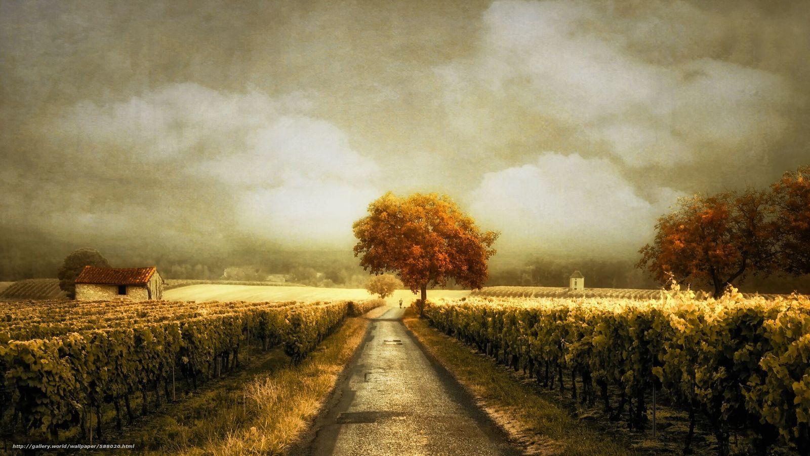 下载壁纸 道路,  葡萄园,  景观 免费为您的桌面分辨率的壁纸 2500x1406 — 图片 №588020