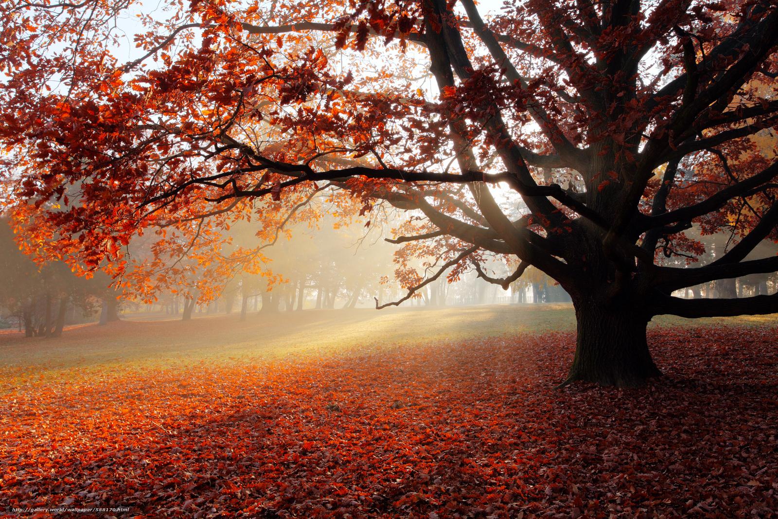 scaricare gli sfondi natura,  parco,  paesaggio,  albero solitario Sfondi gratis per la risoluzione del desktop 5592x3728 — immagine №588170