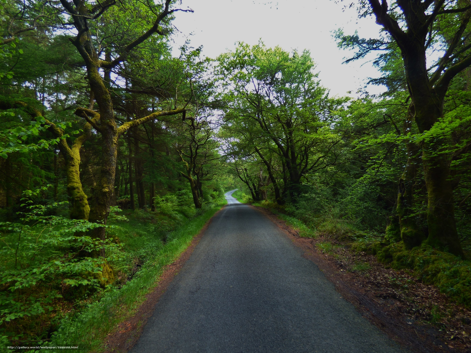 Tlcharger Fond d'ecran route,  forêt,  arbres,  paysage Fonds d'ecran gratuits pour votre rsolution du bureau 4608x3456 — image №588688