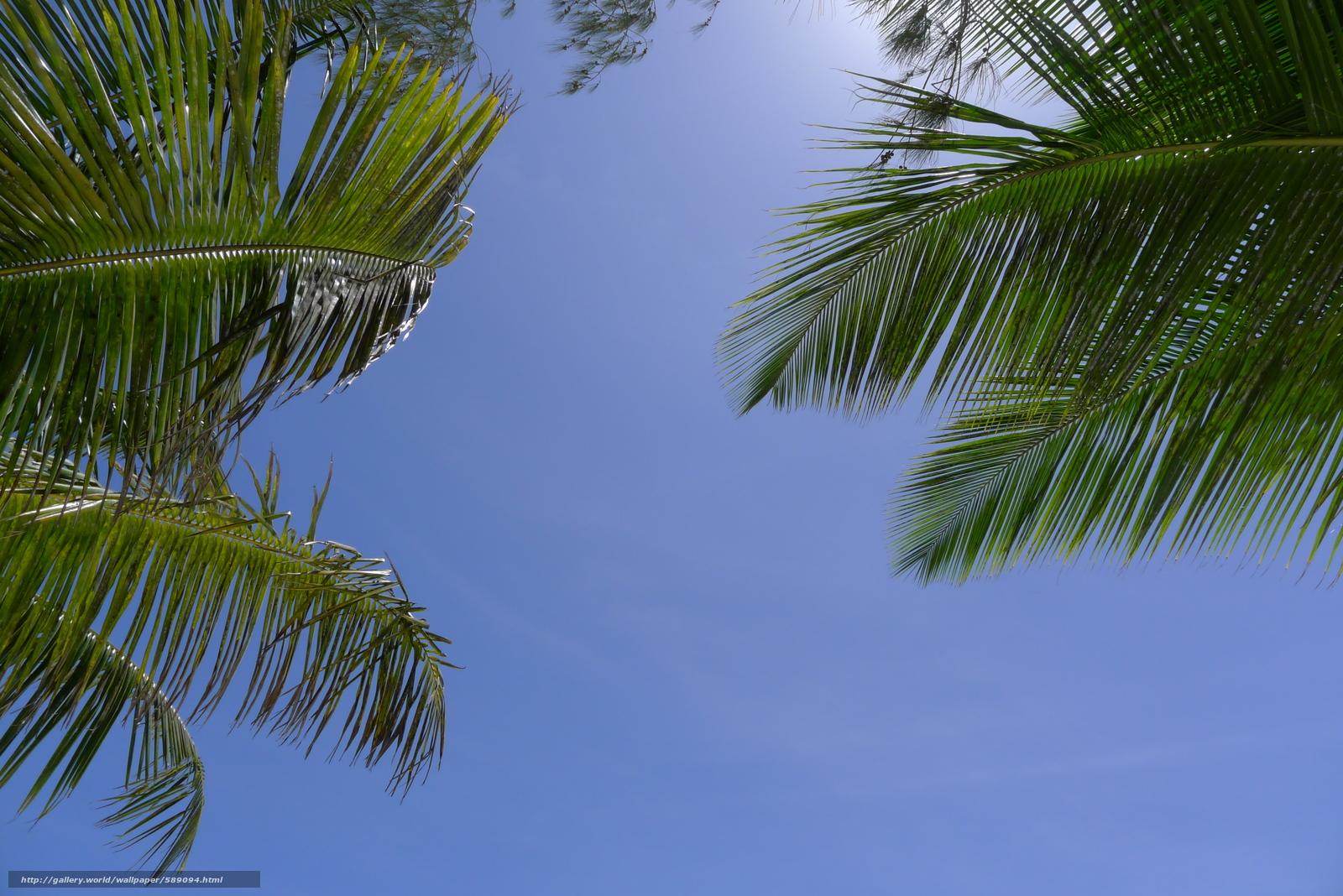 Tlcharger Fond d'ecran Palms,  ciel,  nature Fonds d'ecran gratuits pour votre rsolution du bureau 3776x2520 — image №589094