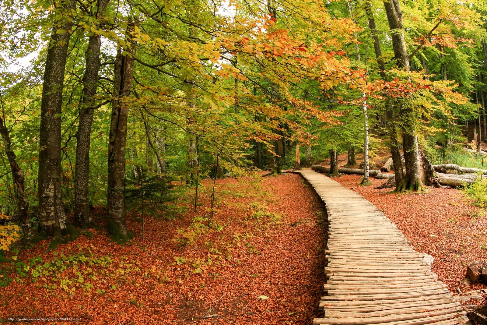 Baixar Wallpaper floresta,  árvores,  outono,  piso de madeira Papis de parede grtis na resoluo 3786x2524 — quadro №590316