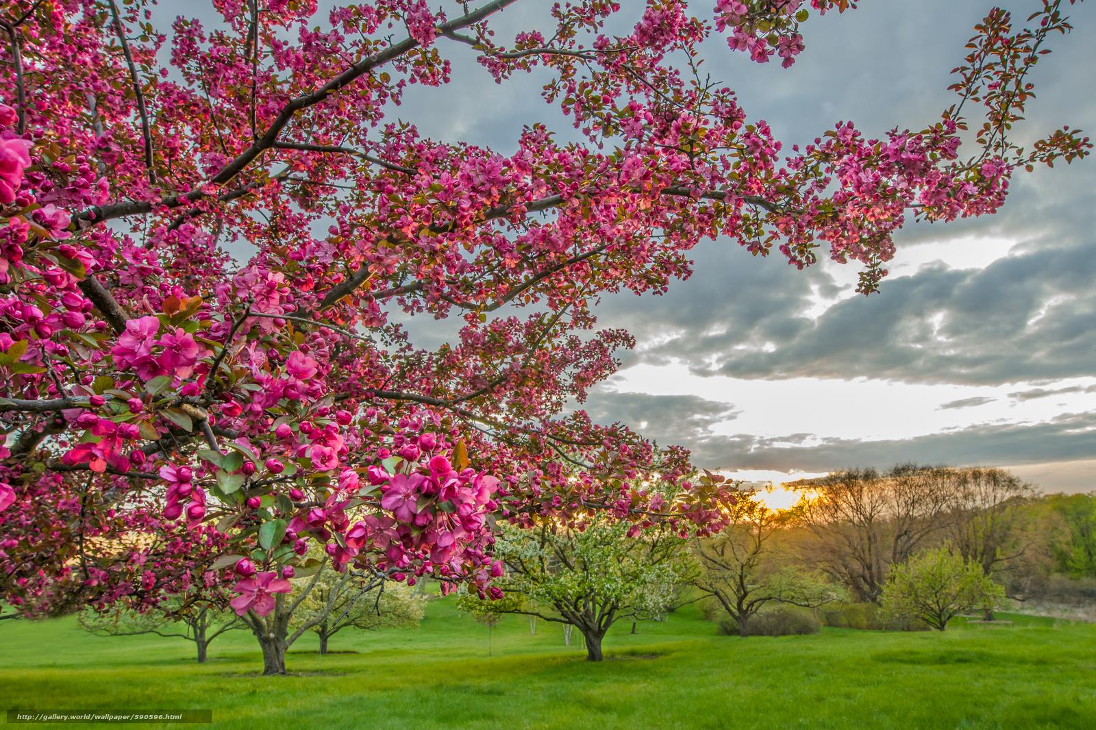 Tlcharger fond d 39 ecran jardin arbres fleurs paysage for Jardin japonais fond d ecran