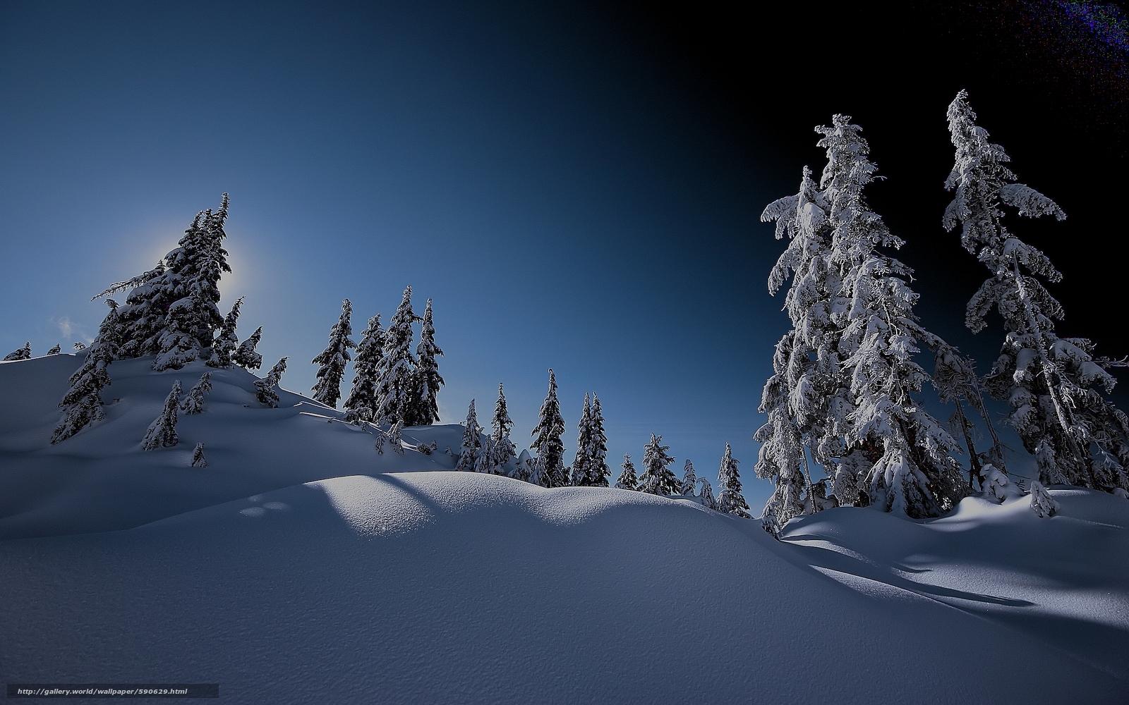 scaricare gli sfondi inverno,  alberi,  abete rosso,  nevicata Sfondi gratis per la risoluzione del desktop 2560x1600 — immagine №590629