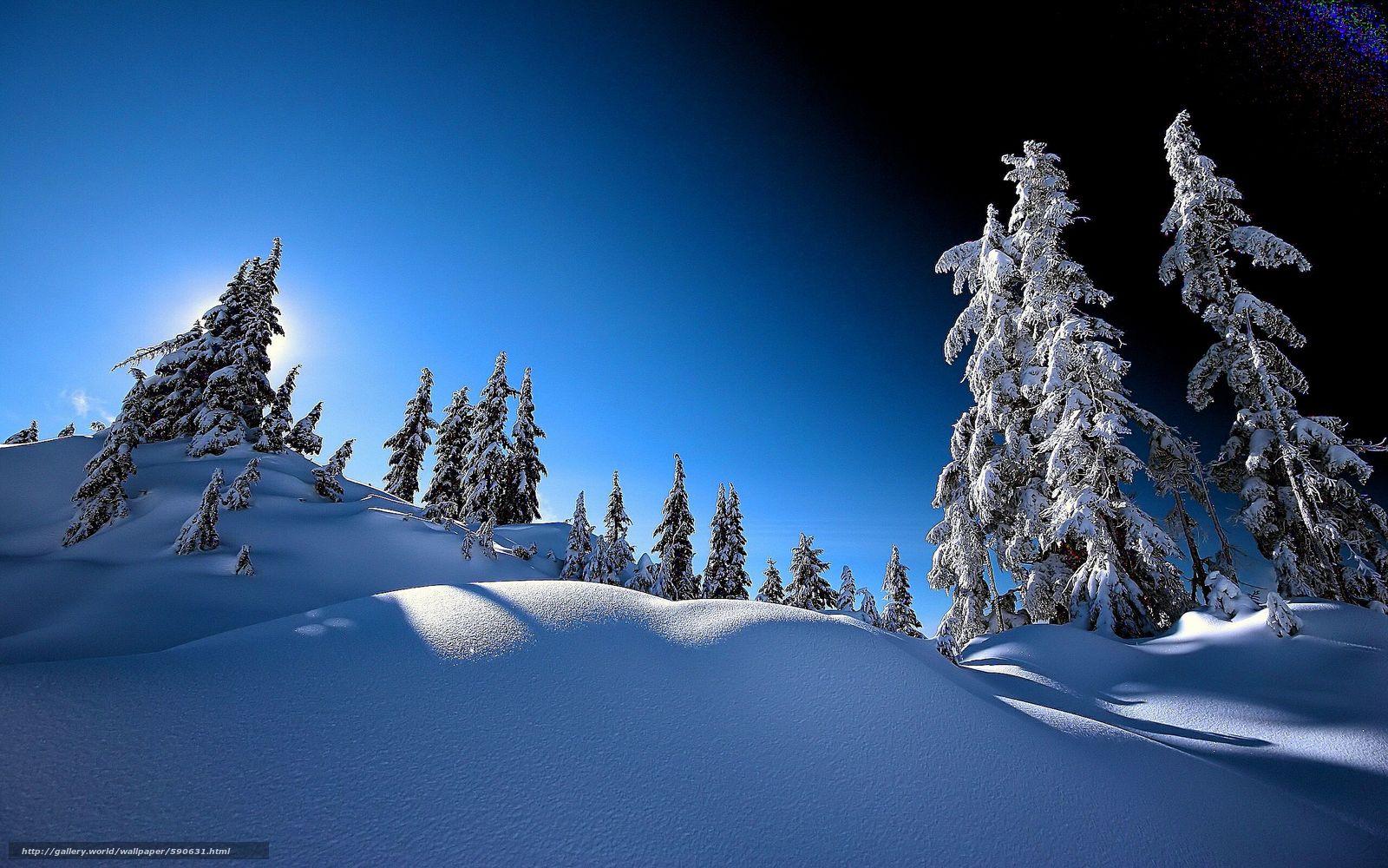 Скачать обои зима,  деревья,  ели,  снег бесплатно для рабочего стола в разрешении 2560x1600 — картинка №590631