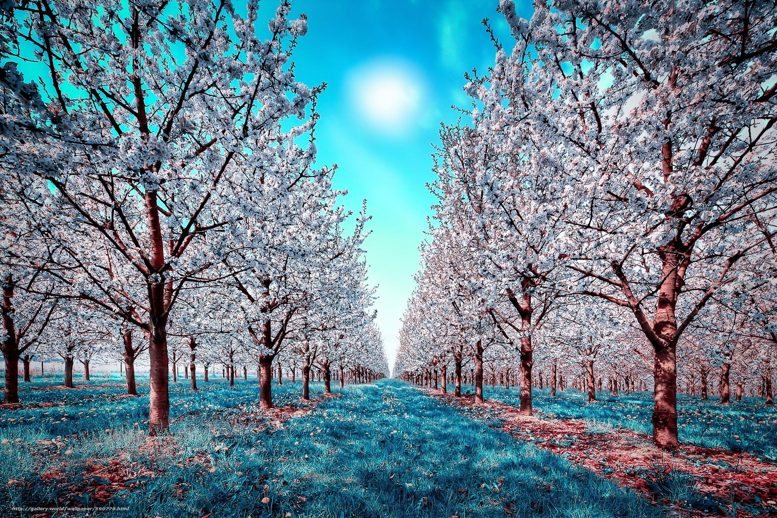 Scaricare gli sfondi natura primavera fiori fioritura for Sfondi desktop gratis primavera