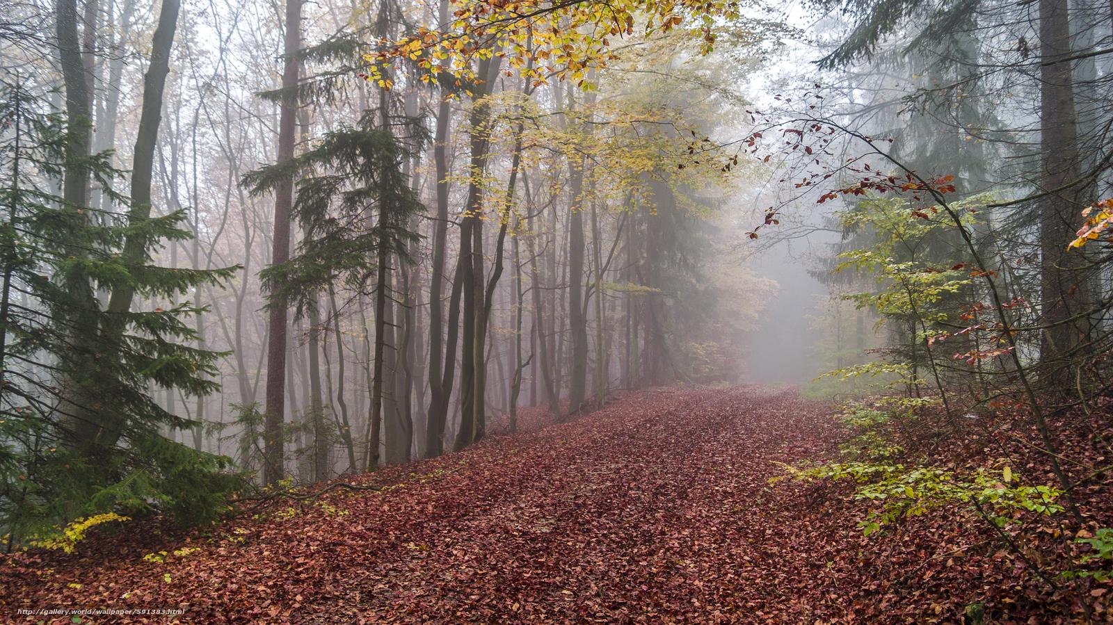 Скачать обои осень,  дорога,  деревья,  туман бесплатно для рабочего стола в разрешении 4912x2760 — картинка №591383