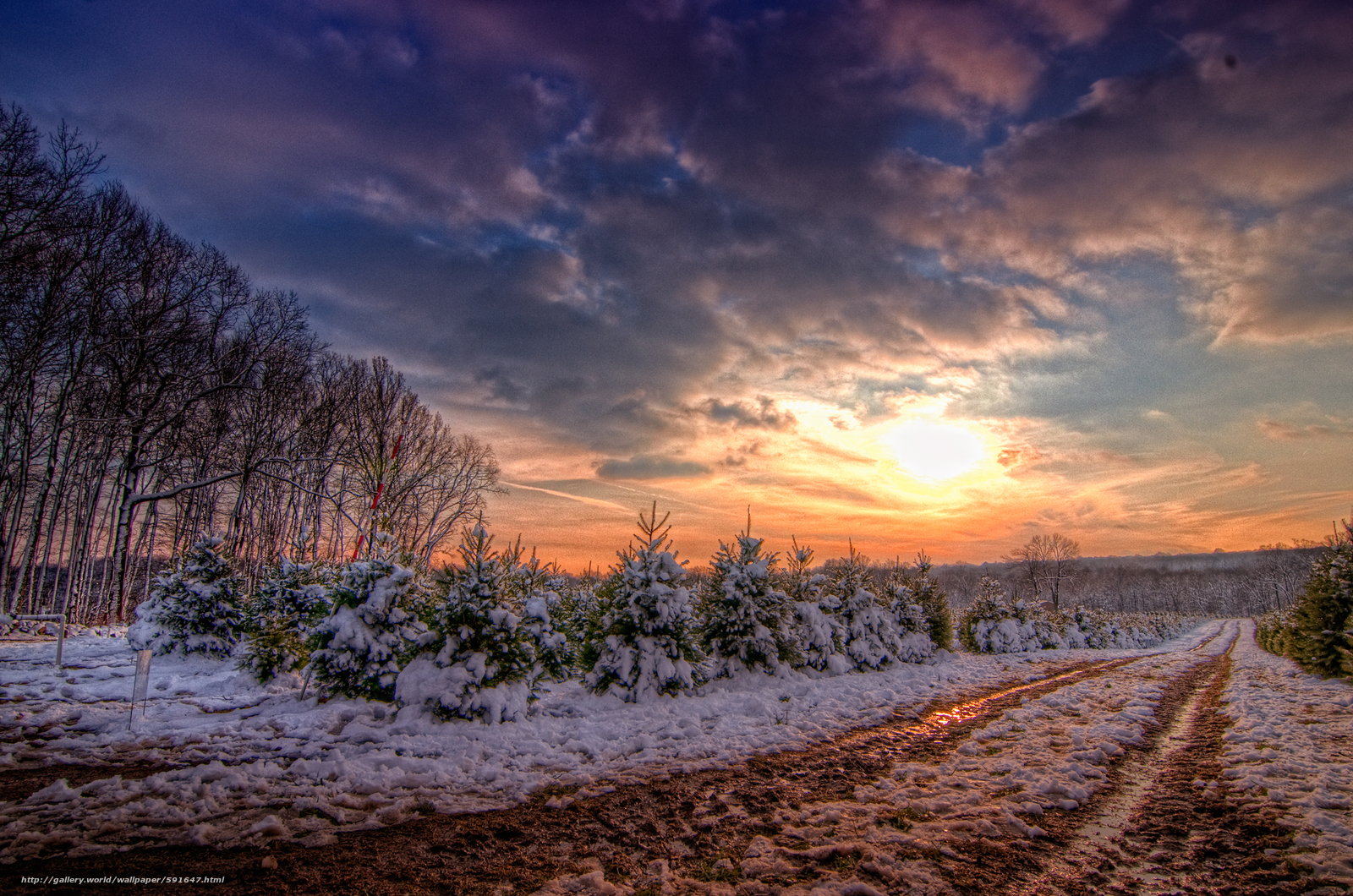 Download wallpaper sunset,  road,  trees,  landscape free desktop wallpaper in the resolution 2000x1325 — picture №591647