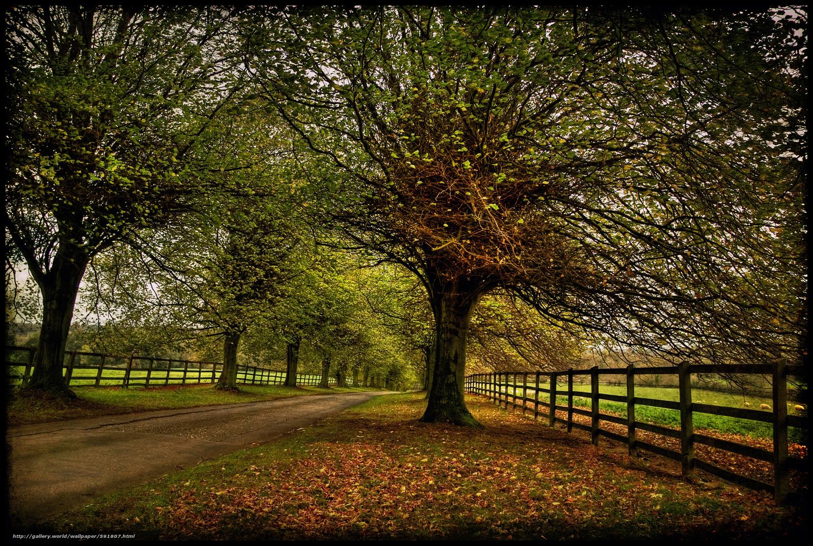 scaricare gli sfondi autunno,  stradale,  alberi,  paesaggio Sfondi gratis per la risoluzione del desktop 2076x1393 — immagine №591807