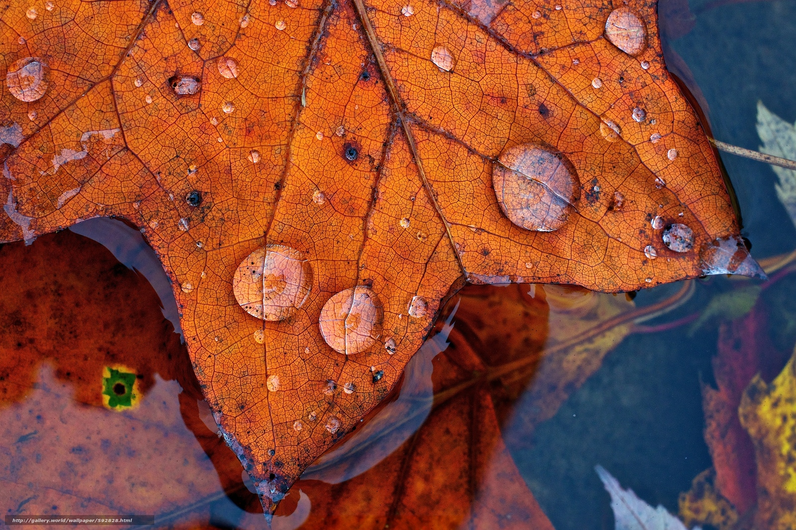 Download wallpaper water,  foliage,  drops,  autumn free desktop wallpaper in the resolution 4377x2918 — picture №592828