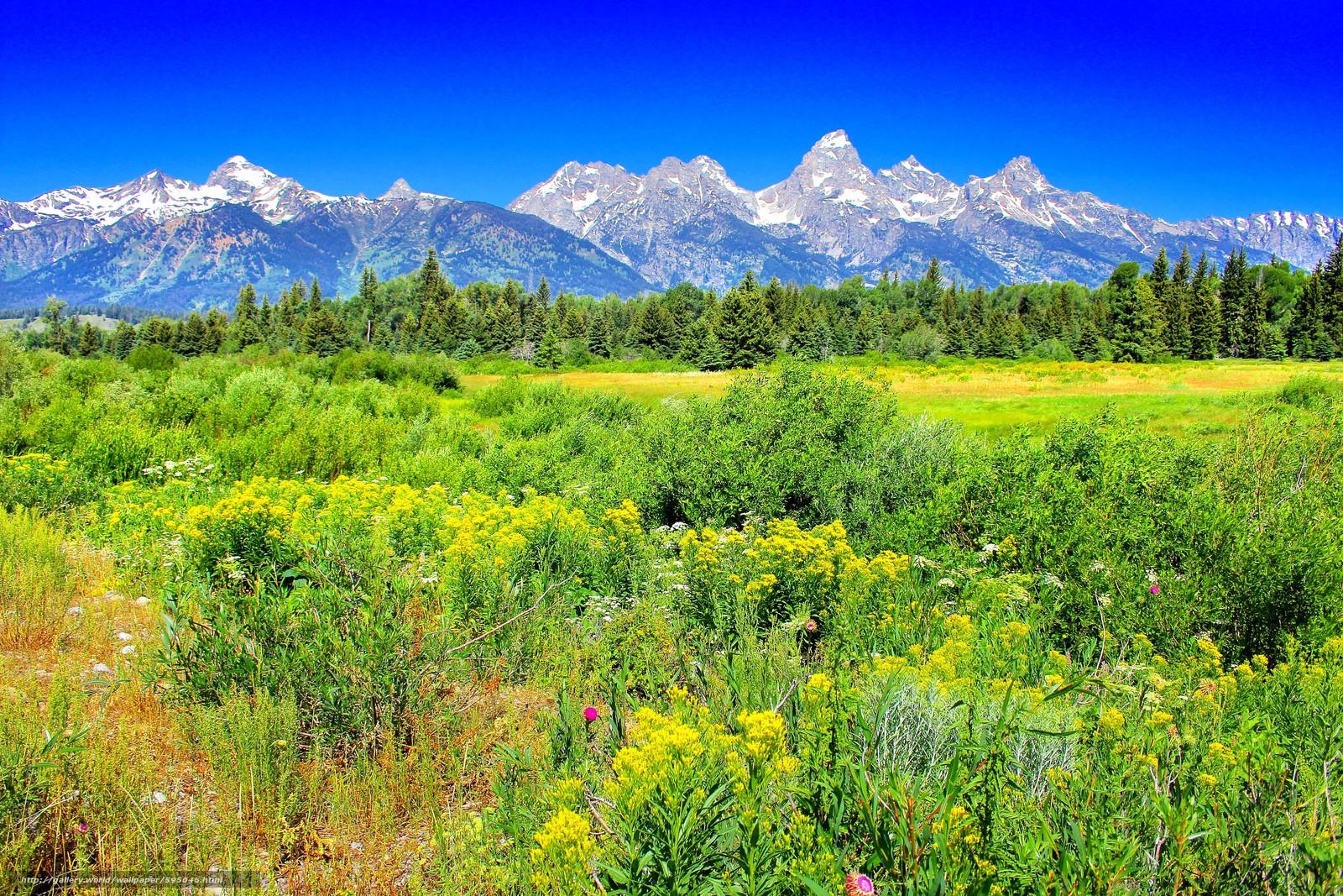 Descargar gratis Yellostone,  Montañas,  campo,  árboles Fondos de escritorio en la resolucin 5184x3456 — imagen №595046