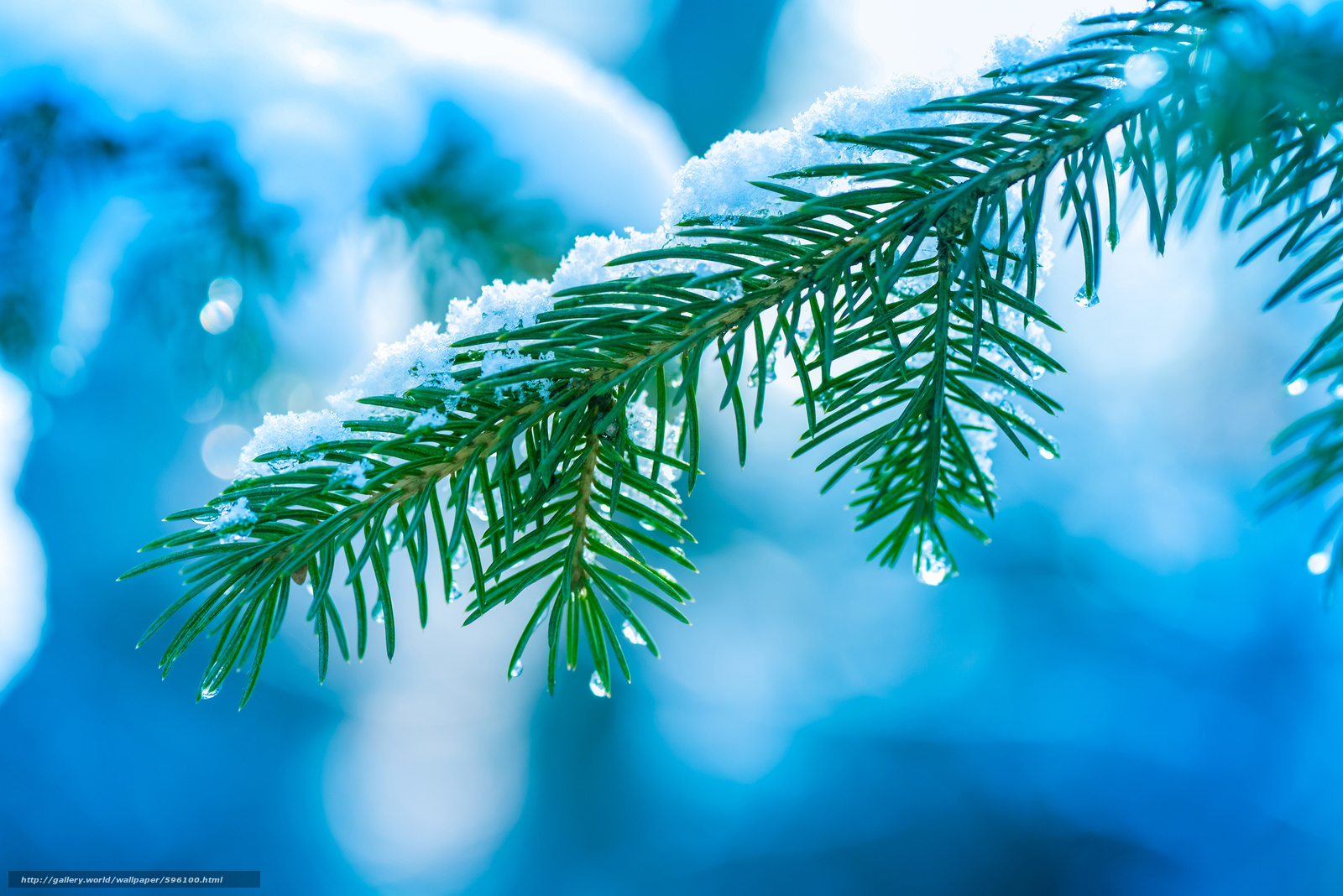 Download wallpaper winter,  branch,  spruce,  needles free desktop wallpaper in the resolution 3000x2003 — picture №596100