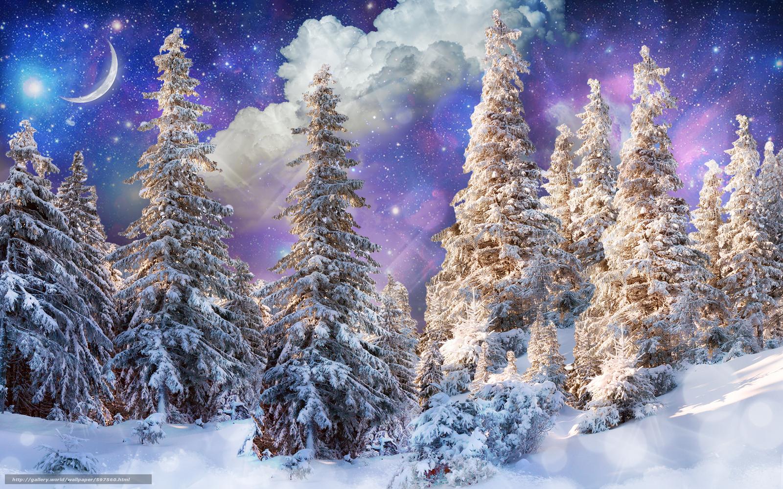 下载壁纸 冬天,  树,  雪,  景观 免费为您的桌面分辨率的壁纸 1920x1200 — 图片 №597560
