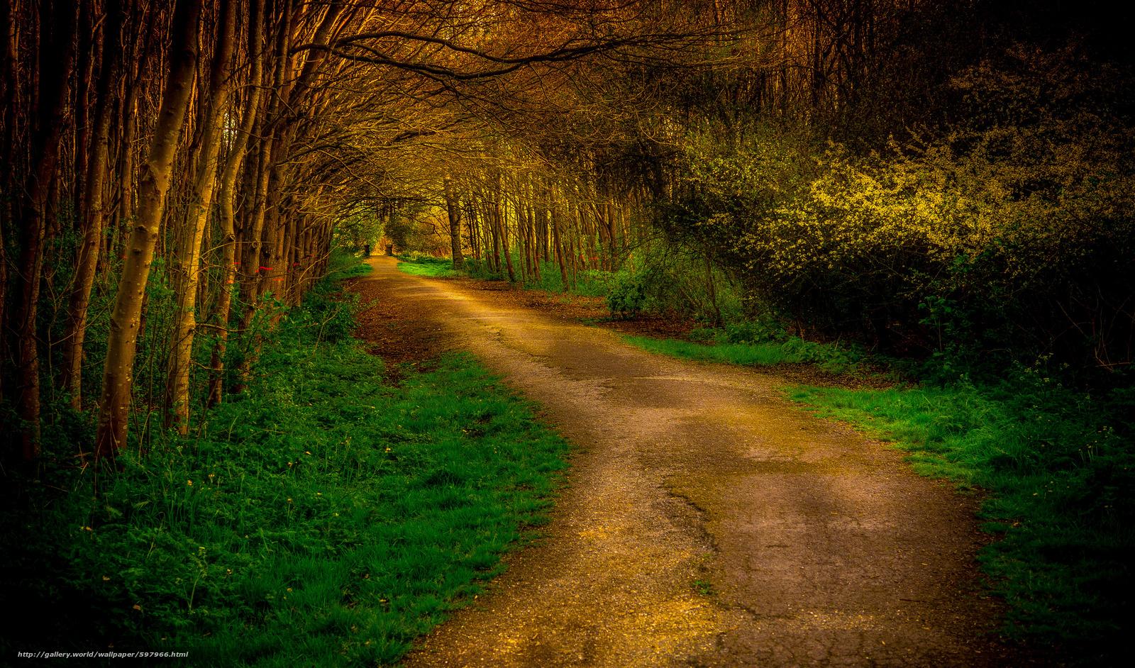 下载壁纸 森林,  树,  道路,  景观 免费为您的桌面分辨率的壁纸 5476x3223 — 图片 №597966