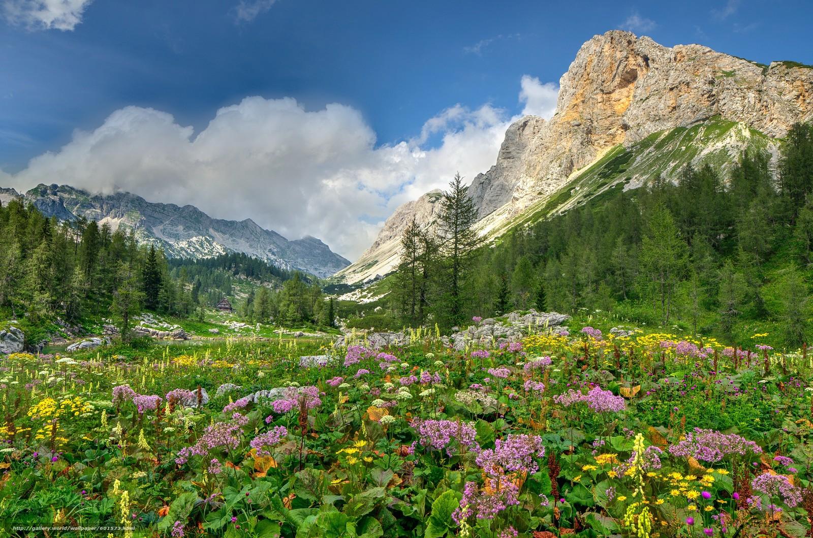 Tlcharger fond d 39 ecran fleurs prairies de montagne alpes montagnes fonds d 39 ecran gratuits - Fleurs de montagne alpes ...