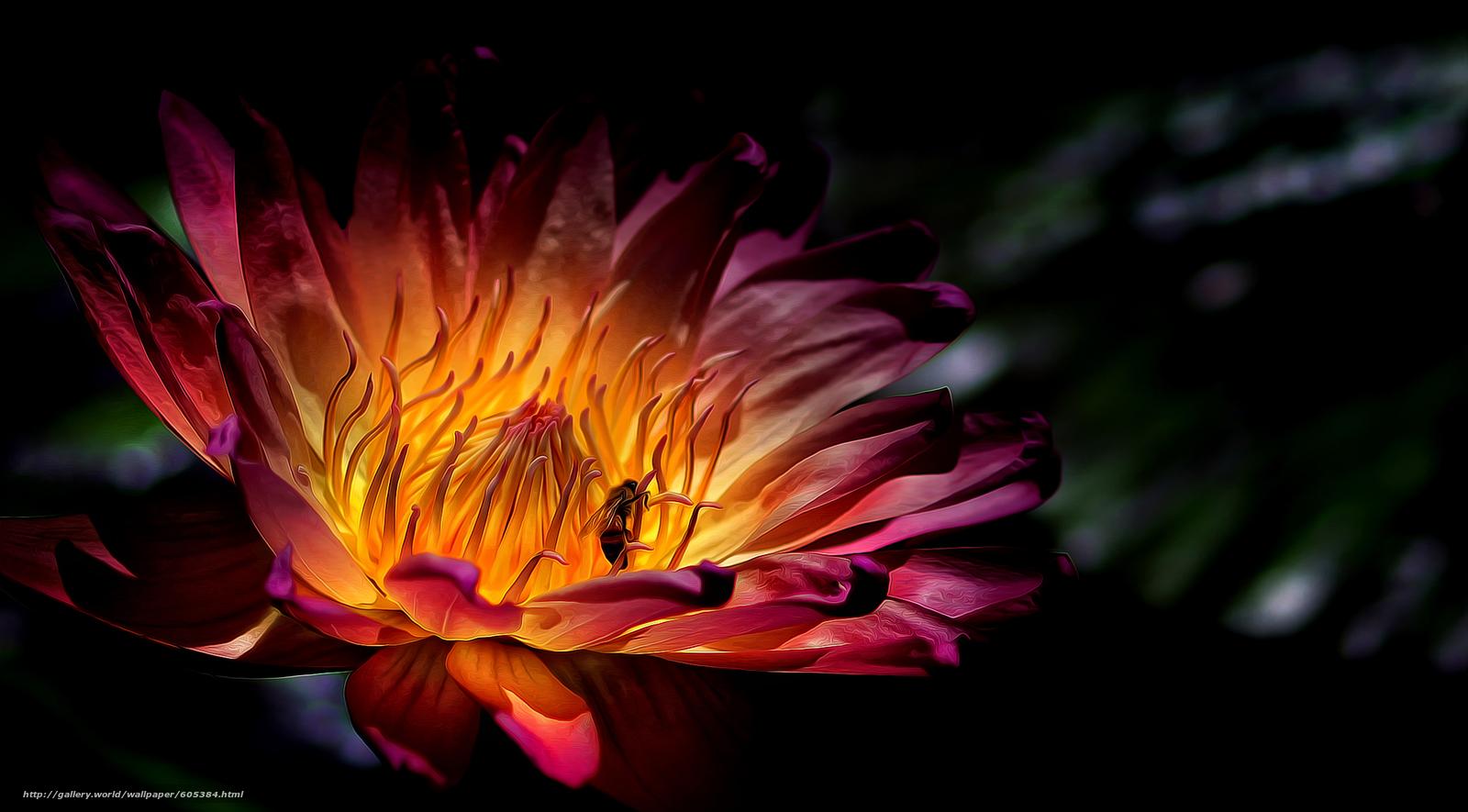 下载壁纸 花,  蜜蜂,  宏 免费为您的桌面分辨率的壁纸 2222x1229 — 图片 №605384