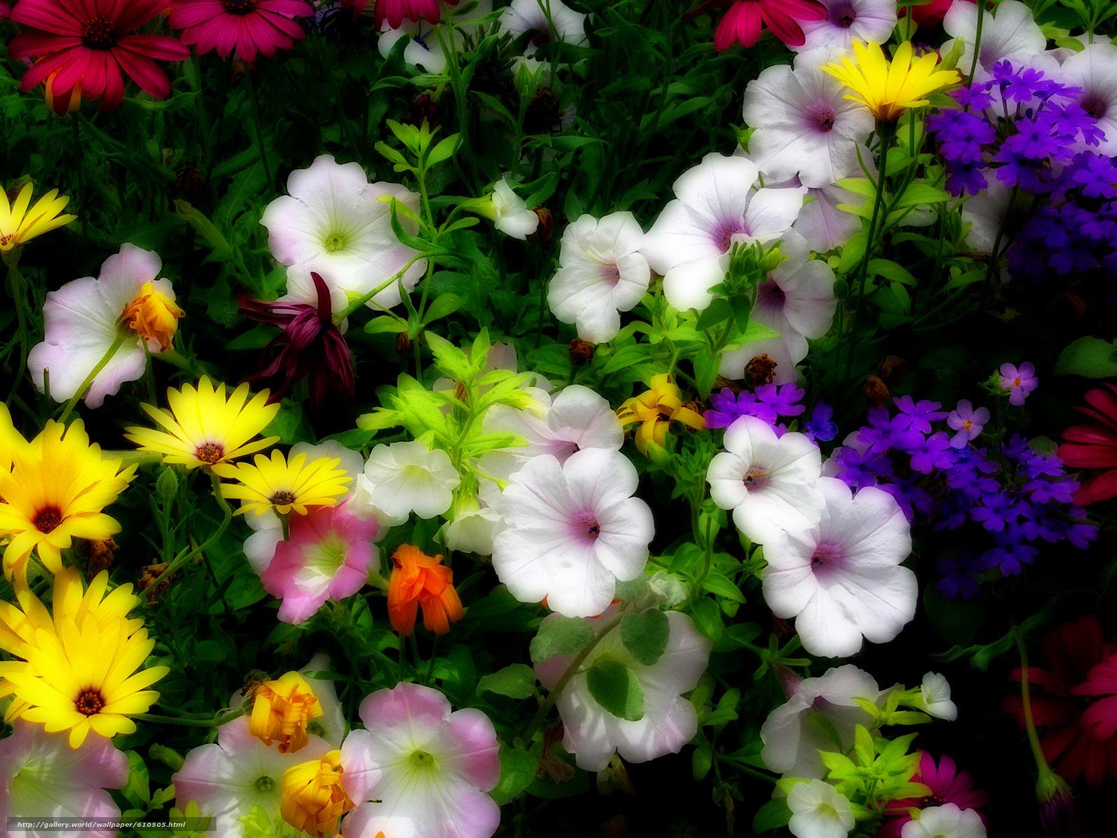 scaricare gli sfondi aiuola,  Fiori,  flora Sfondi gratis per la risoluzione del desktop 1600x1200 — immagine №610505