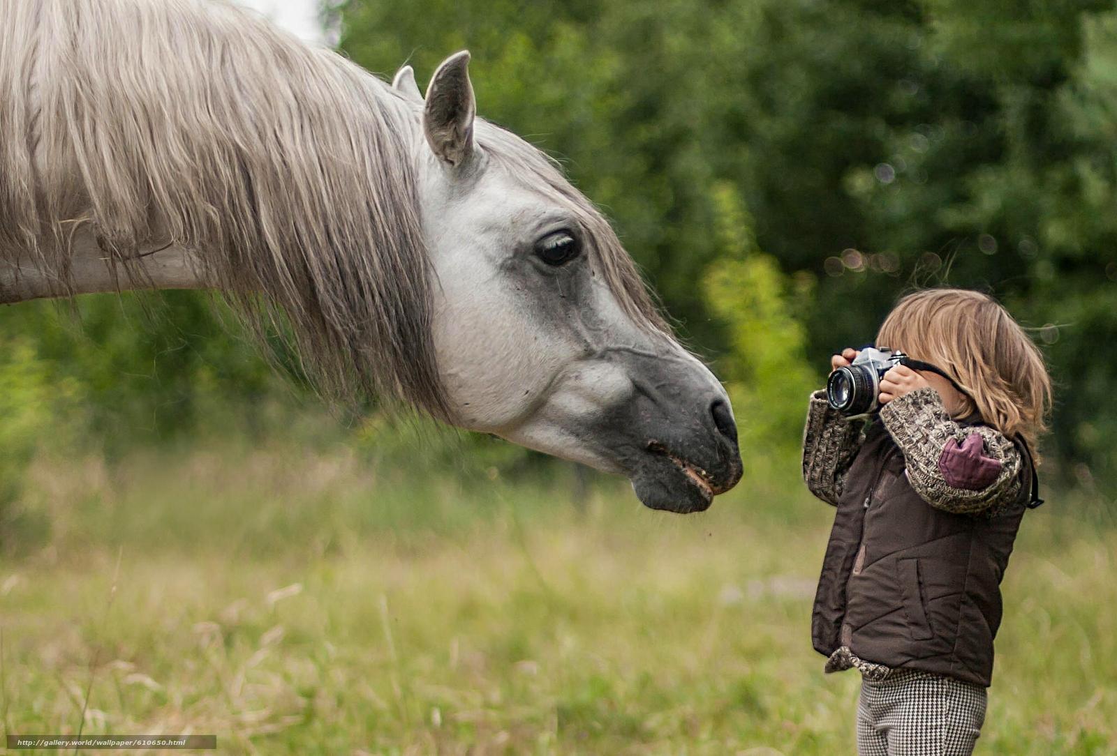 Скачать обои лошадь,  конь,  морда,  грива бесплатно для рабочего стола в разрешении 2048x1387 — картинка №610650