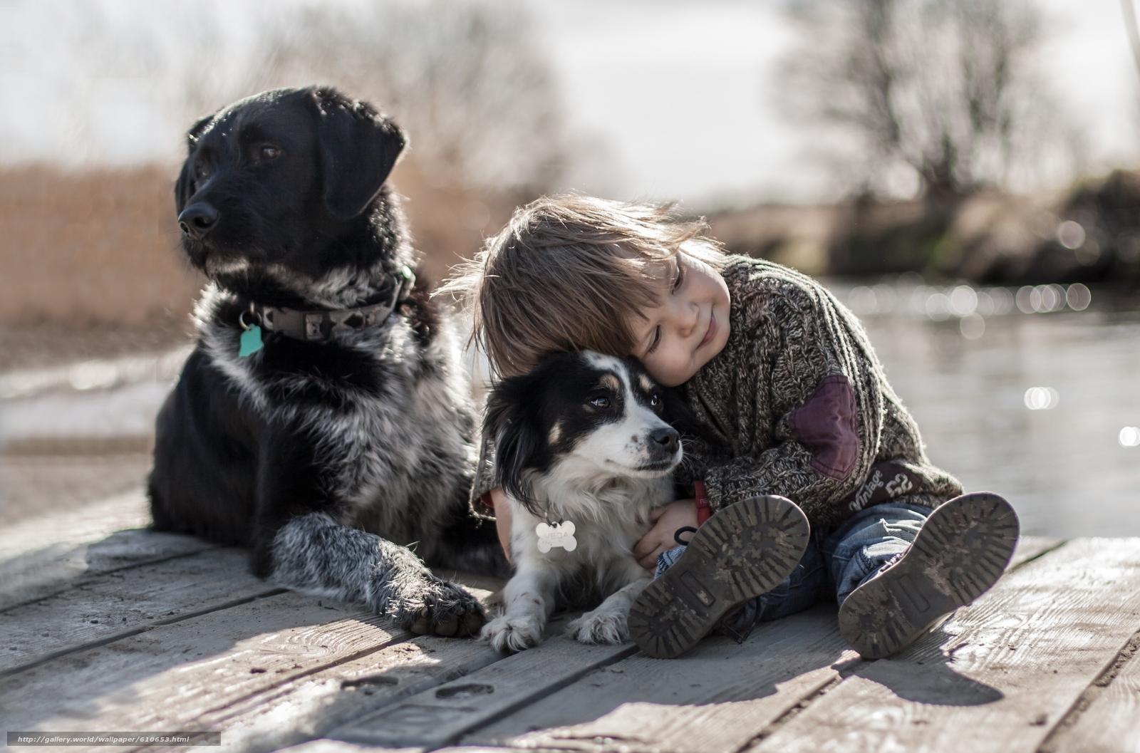 Скачать обои мальчик,  собаки,  друзья,  настроение бесплатно для рабочего стола в разрешении 2880x1902 — картинка №610653