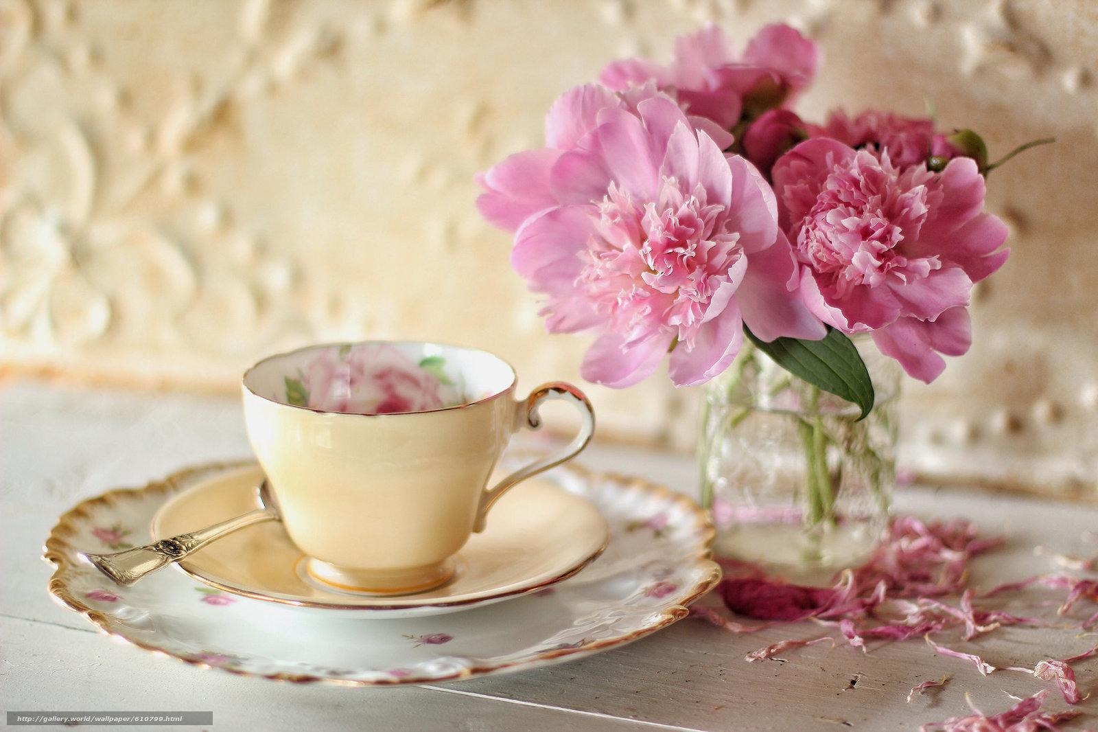 Садовые цветы каталог с фотографиями и названиями