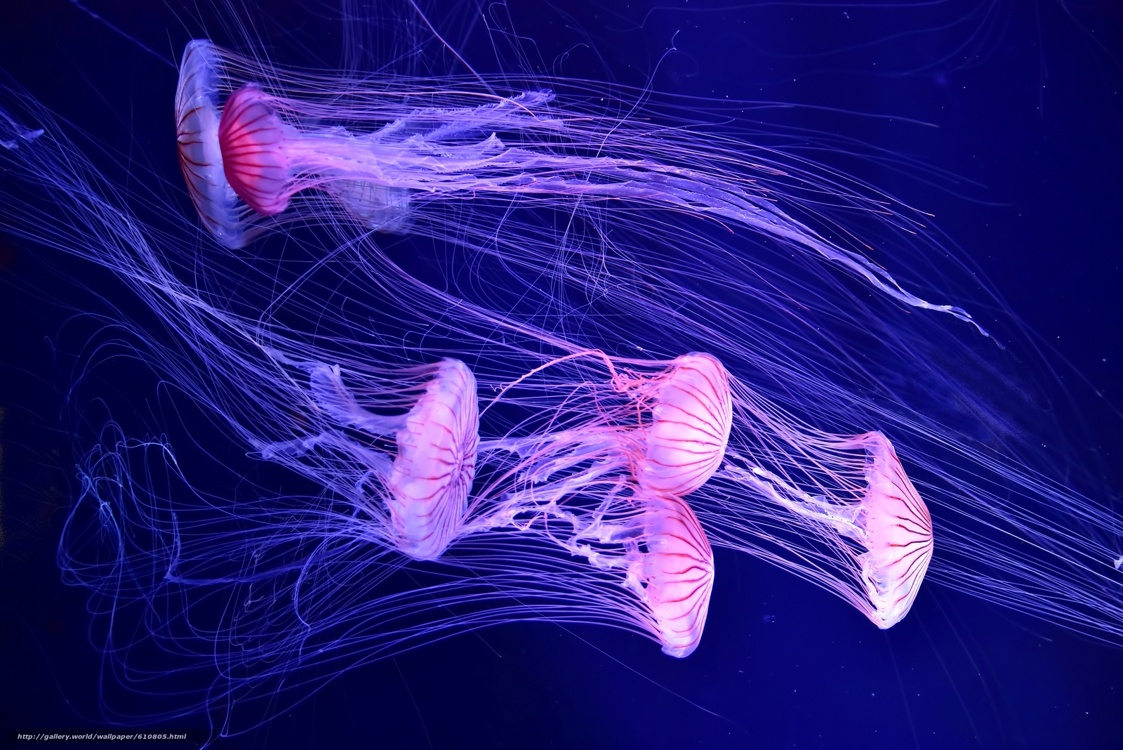 Download wallpaper Jellyfish,  sea,  water free desktop wallpaper in the resolution 4000x2670 — picture №610805
