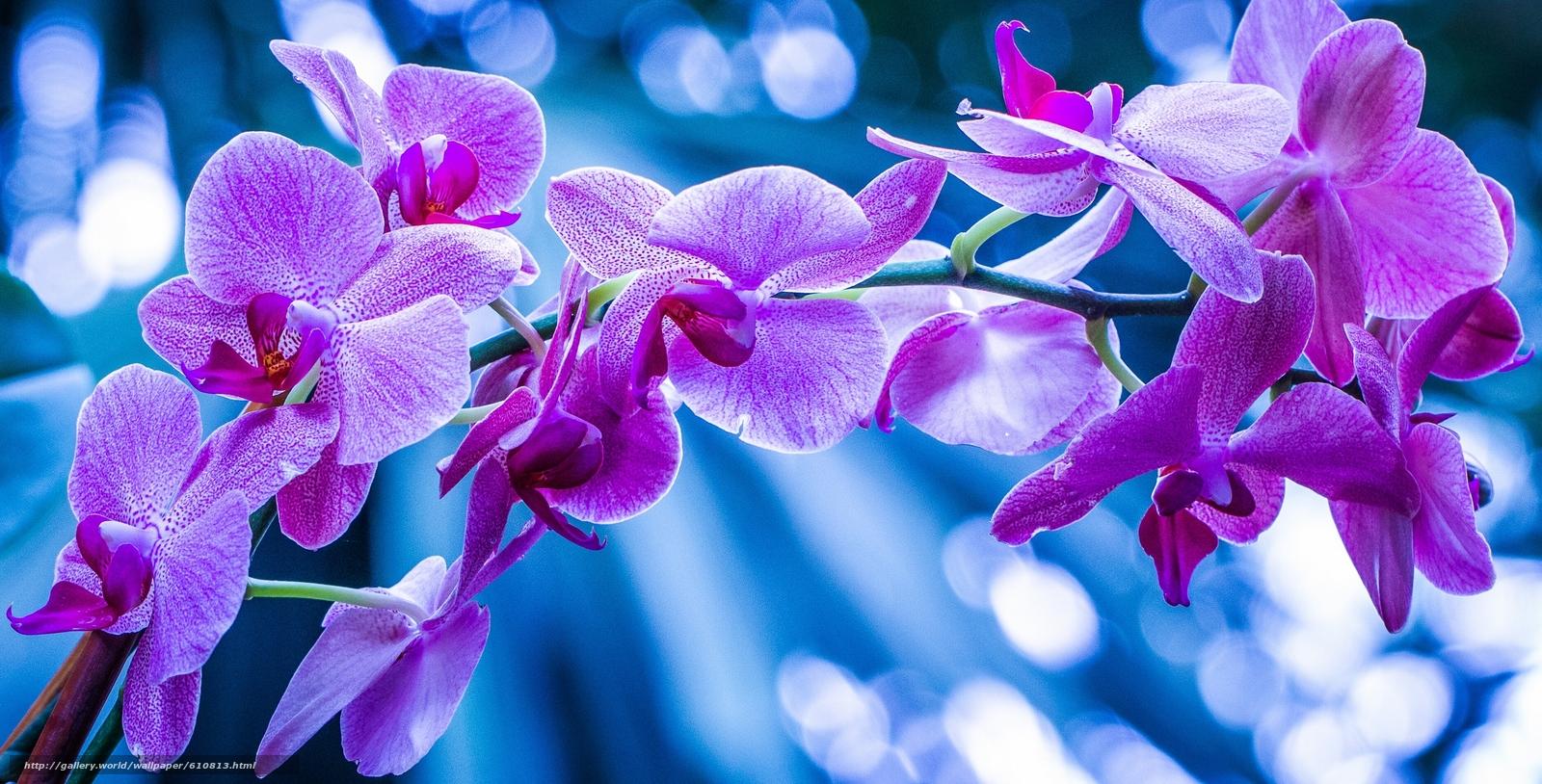 Скачать обои орхидея,  экзотика,  ветка,  макро бесплатно для рабочего стола в разрешении 2830x1440 — картинка №610813