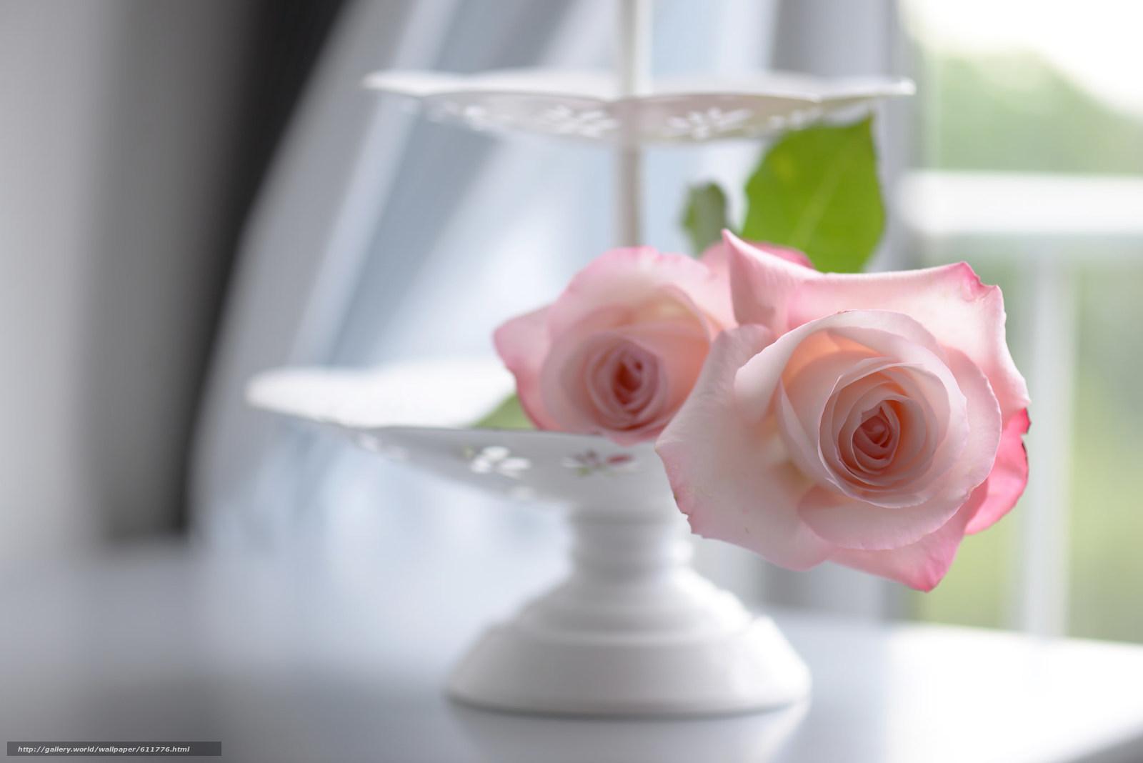 scaricare gli sfondi Roses,  vaso,  tenerezza,  bokeh Sfondi gratis per la risoluzione del desktop 2048x1367 — immagine №611776