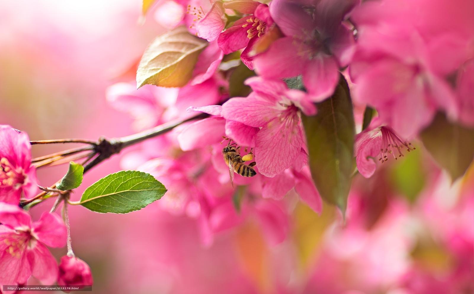 Скачать обои сакура,  вишня,  цветение,  цветки бесплатно для рабочего стола в разрешении 2048x1271 — картинка №613178