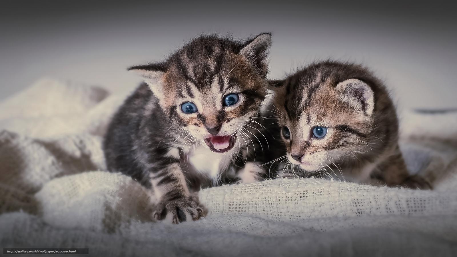 Tlcharger fond decran chatons enfants jumeaux fonds decran