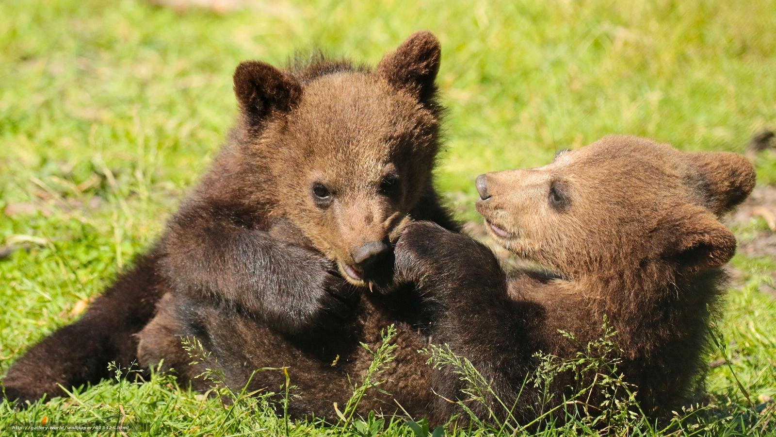 Descargar gratis Bears,  Osos,  juego,  divertido Fondos de escritorio en la resolucin 2560x1440 — imagen №613425