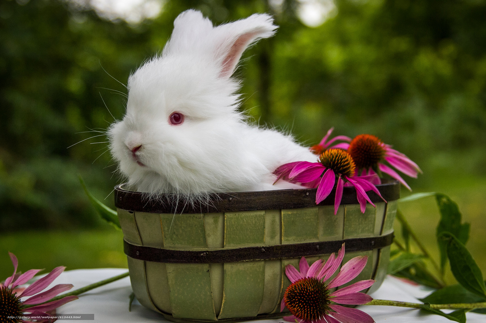 Download Wallpaper White Rabbit Flowers Free Desktop In The Resolution 2048x1365 Picture No613443