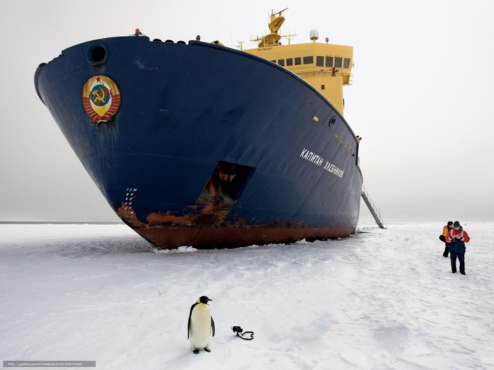 Baixar Wallpaper navio,  navio quebra-gelo,  pinguim,  gelo Papis de parede grtis na resoluo 1600x1200 — quadro №613487