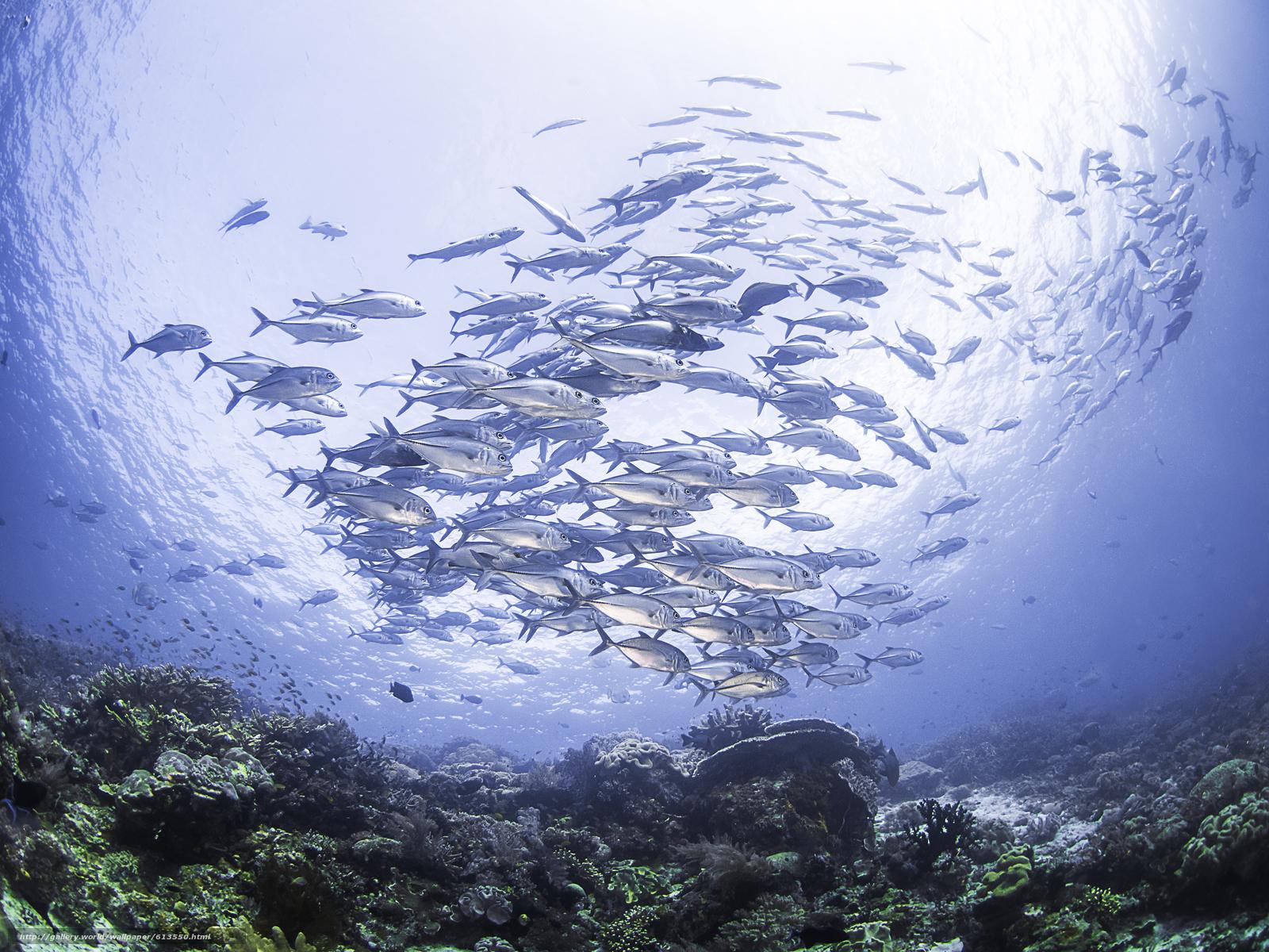 Tlcharger Fond d'ecran mer,  fond de la mer,  Karalli,  école de poisson Fonds d'ecran gratuits pour votre rsolution du bureau 4608x3456 — image №613550