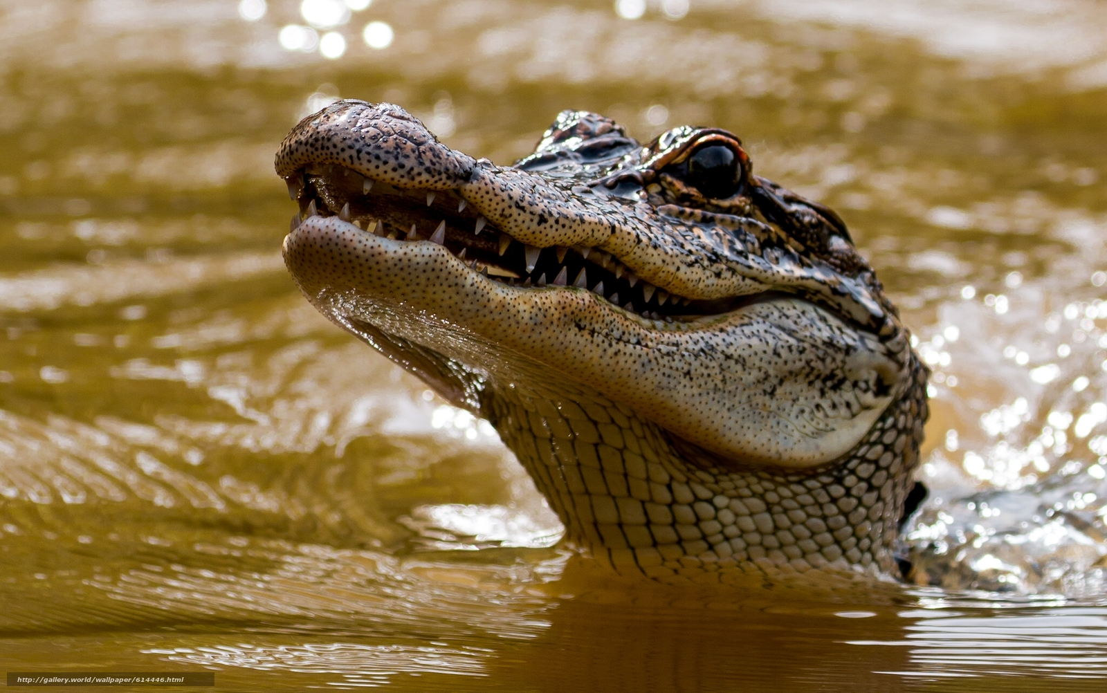 wallpaper 1920x1080 crocodile snout - photo #7
